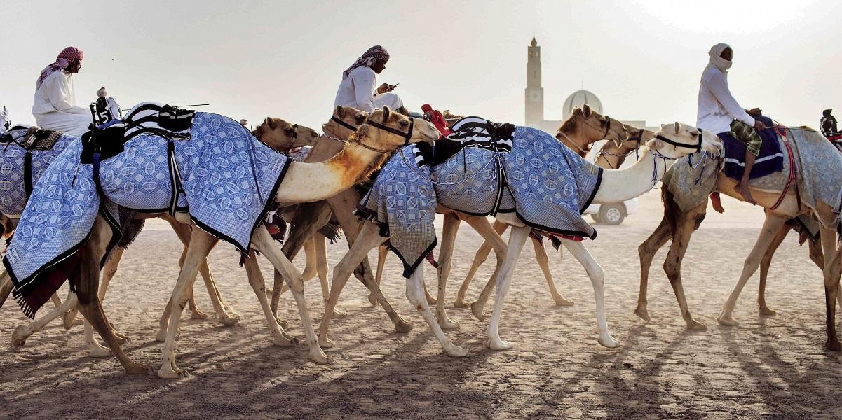 Wyprawa na wielbłądach na pustynię